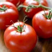 tomategefuellt1